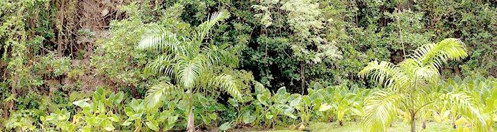 Dschungel-Dickicht
