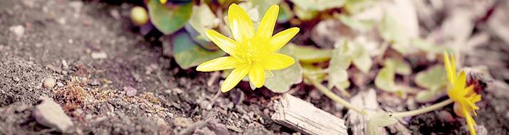 Bodendeckerpflanzen